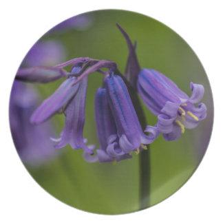 Flor del Bluebell Platos Para Fiestas