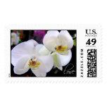 Flor del boda del amor de las orquídeas envio