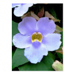 Flor del borde de la carretera, Placencia, Belice Postal