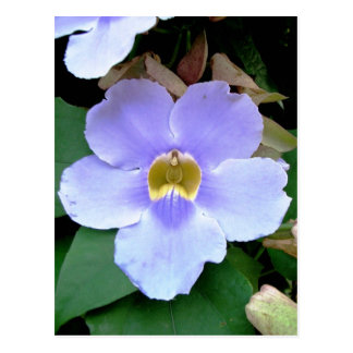 Flor del borde de la carretera Placencia Belice Postal