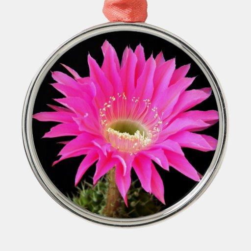 flor del cactus abierta para el amor adorno redondo plateado
