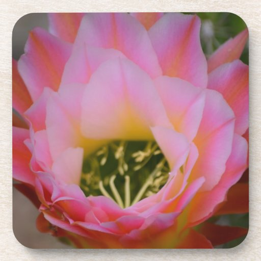 Flor del cactus de Arizona Posavasos