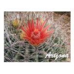 Flor del cactus de barril de Arizona Postales