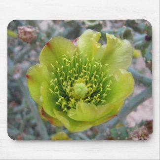 Flor del cactus de Cholla del lápiz Alfombrillas De Raton