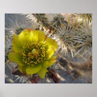 Flor del cactus de Cholla Impresiones