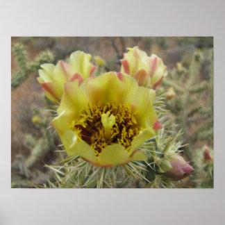 Flor del cactus de Cholla Póster