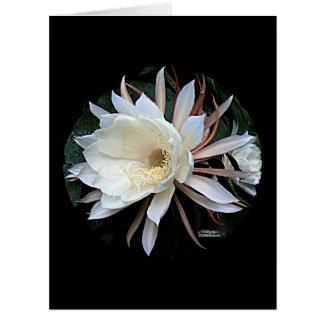 Flor del cactus de Epiphyte Tarjeta De Felicitación Grande