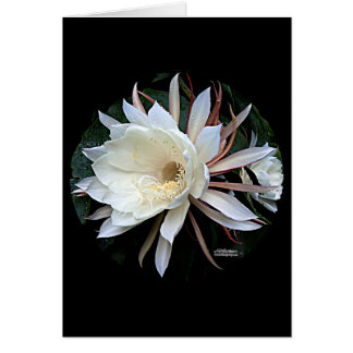 Flor del cactus de Epiphyte Tarjeta Pequeña