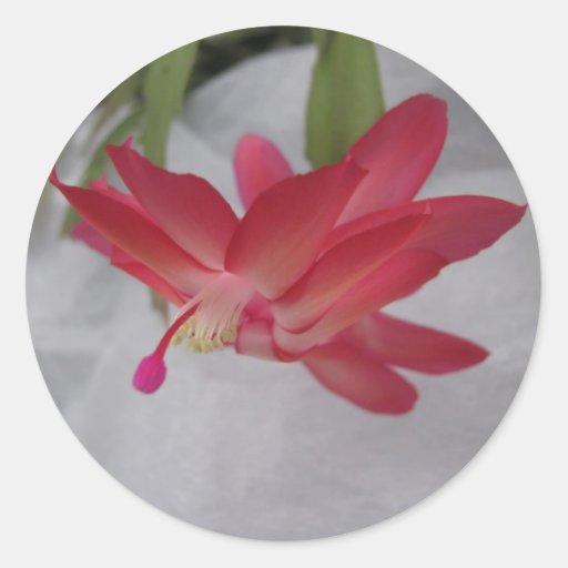 Flor del cactus de Navidad Pegatina Redonda