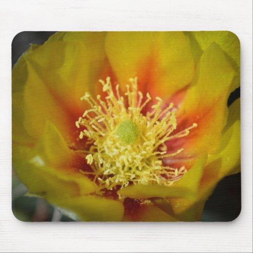 Flor del cactus del amarillo anaranjado alfombrillas de raton