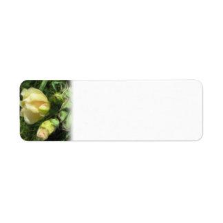 Flor del cactus del higo chumbo etiquetas de remite