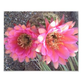 Flor del cactus del rosa de la foto del arte de la fotografía