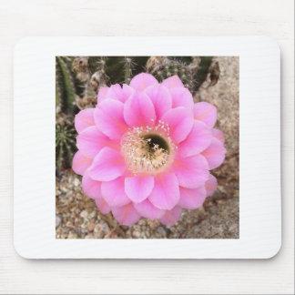 Flor del cactus del rosa del cojín de ratón alfombrillas de ratón