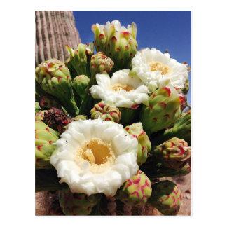 Flor del cactus del Saguaro - flor de estado de Tarjetas Postales