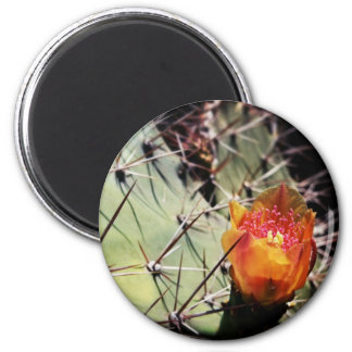 Flor del cactus - imanes imán para frigorífico