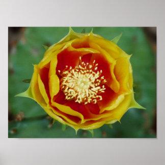 Flor del cactus impresiones