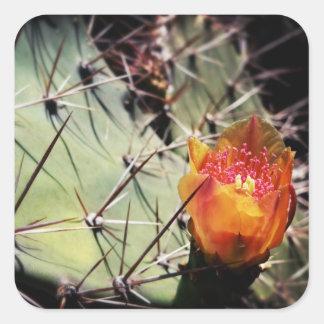 Flor del cactus - pegatinas pegatina cuadrada
