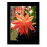 Flor del cactus postal