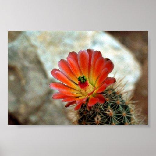 Flor del cactus póster