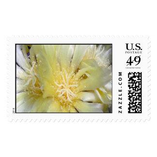 Flor del cactus envio