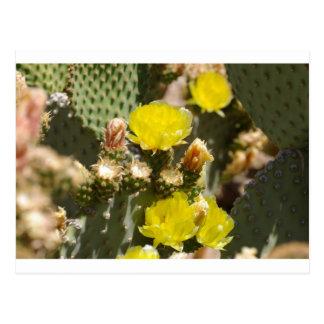 Flor del cactus tarjetas postales