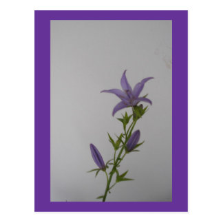 Flor del Campanula Tarjetas Postales