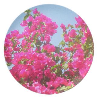 Flor del Caribe del Bougainvillea Plato