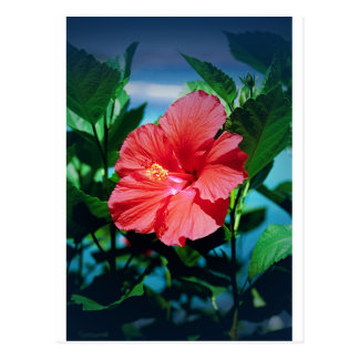 Flor del Caribe Postal