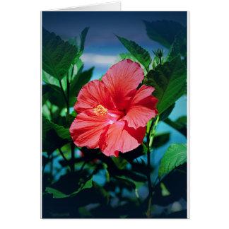 Flor del Caribe Tarjeta De Felicitación