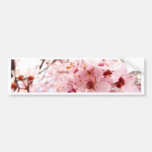 Flor del ciruelo etiqueta de parachoque