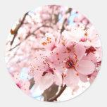 Flor del ciruelo etiquetas redondas