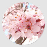 Flor del ciruelo pegatina redonda