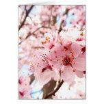 Flor del ciruelo tarjetas
