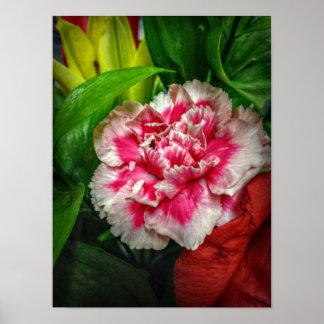 Flor del clavel poster