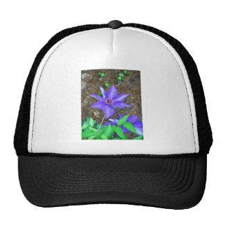 Flor del Clematis púrpura Gorra