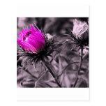 flor del color con blanco y negro postal