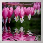 flor del corazón sangrante impresiones