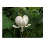 Flor del corazón sangrante tarjetas postales