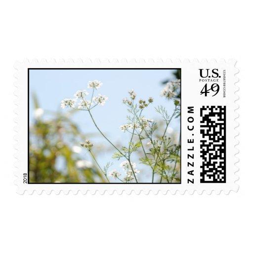 Flor del coriandro timbres postales