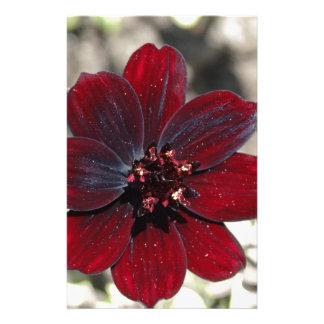 Flor del cosmos del chocolate papelería de diseño