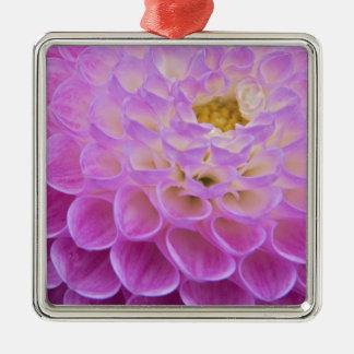 Flor del crisantemo que adorna el sitio grave aden ornamente de reyes