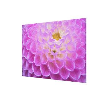 Flor del crisantemo que adorna el sitio grave aden impresion en lona