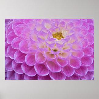 Flor del crisantemo que adorna el sitio grave aden póster
