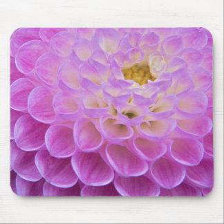 Flor del crisantemo que adorna el sitio grave aden tapetes de ratón