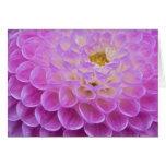 Flor del crisantemo que adorna el sitio grave aden tarjetas