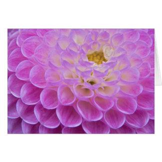 Flor del crisantemo que adorna el sitio grave aden tarjeta de felicitación
