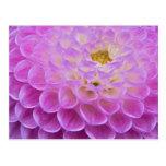 Flor del crisantemo que adorna el sitio grave aden tarjetas postales
