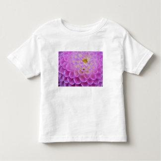 Flor del crisantemo que adorna el sitio grave polera