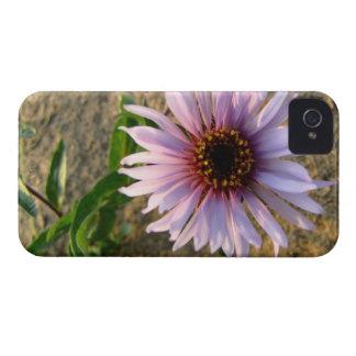 Flor del desierto iPhone 4 Case-Mate carcasas