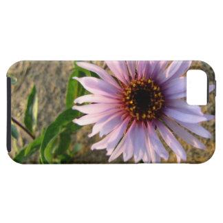 Flor del desierto iPhone 5 fundas